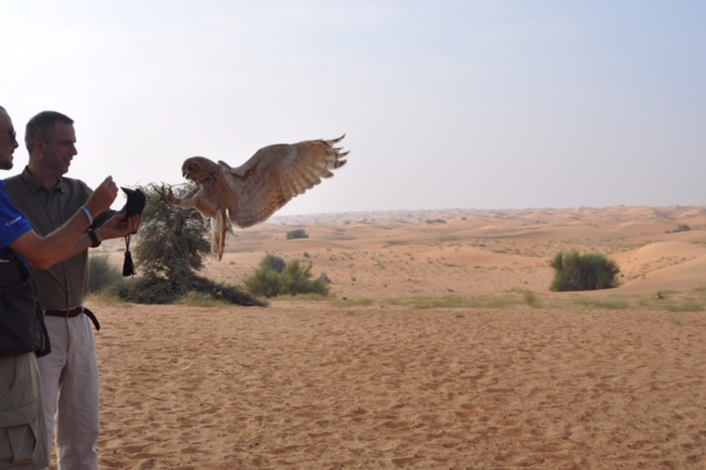 Cersei desert eagle owl arriving at fist