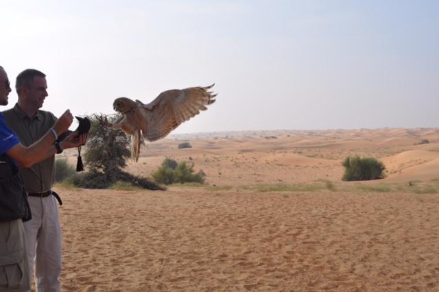 Cersei desert eagle owl arriving at fist